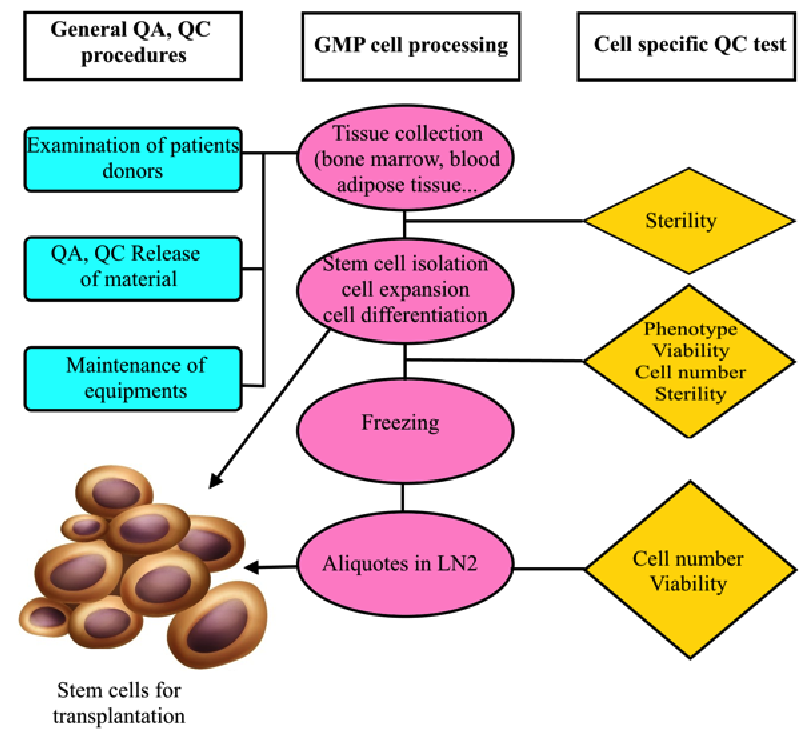 Figure 3 Flowchart of GMP-compliant production of MSCs for clinical application